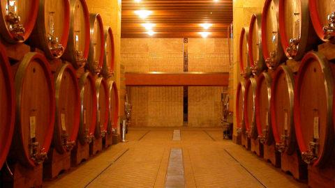 Into the Wine